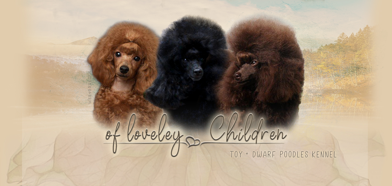 of loveley Children Pudelzucht